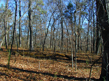 Woods south of Brotherton Field